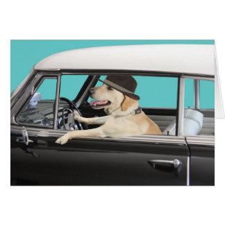 Labrador retriever que conduz o carro clássico cartão comemorativo