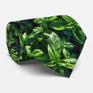 Laço da foto da manjericão gravata