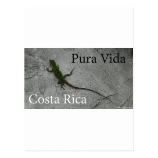 Lagarto na parede Costa Rica Pura Vida Cartão Postal