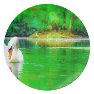 Lago swan prato de festa