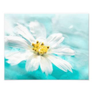 Lagoa de água azul da flor da margarida branca impressão de foto