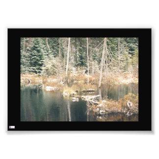 Lagoa do castor no impressão da foto do inverno