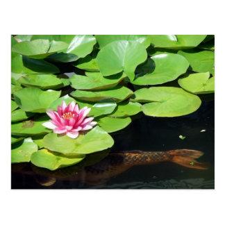 Lagoa do verão/Koi, almofadas de lírio, Waterlily  Cartões Postais