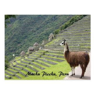 lama peruano cartão postal