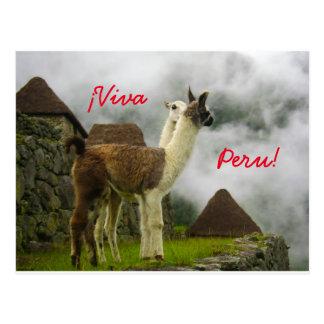 Lamas de Perúvian que beijam o cartão