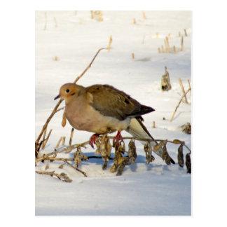 Lamentar mergulhou na foto da neve cartão postal