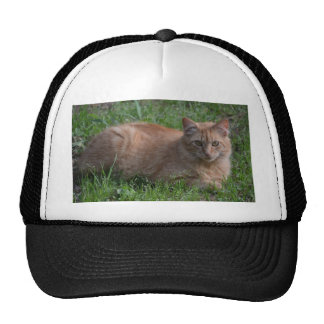 Laranja do gato de gato malhado boné