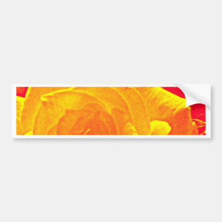 laranja fluorescente do rosa adesivo para carro