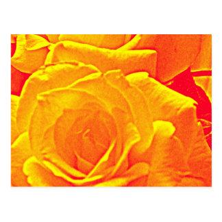 laranja fluorescente do rosa cartão postal