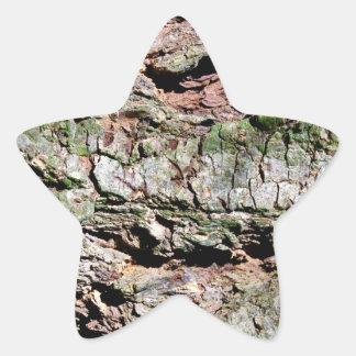 Latido de árvore adesivo estrela