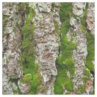 Latido de pinheiro com tecido da foto do musgo