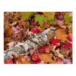 Latido de vidoeiro do cobrir das folhas de bordo cartão postal