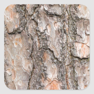 Latido do pinheiro escocês como o fundo adesivo quadrado