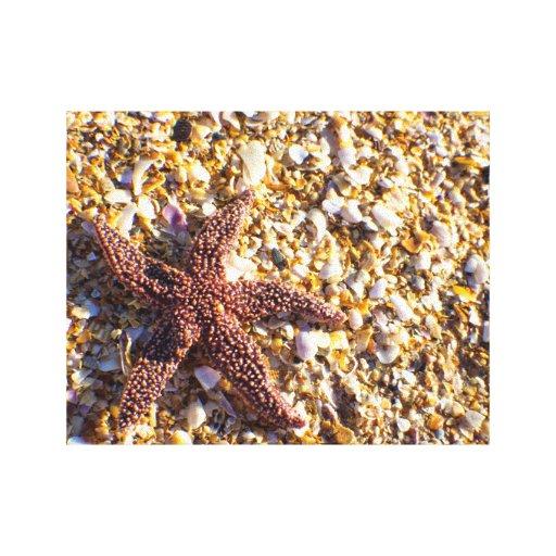 Lavado acima das canvas da estrela do mar impressão de canvas esticada