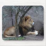 leão africano pela árvore mousepads