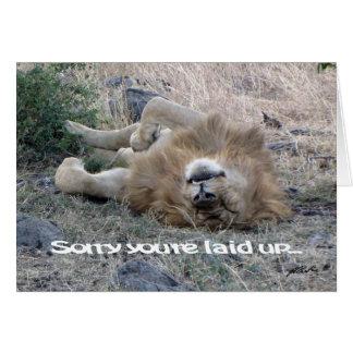 """Leão """"colocado acima"""" do cartão (Masai Mara)"""