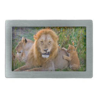 Leão Cub bonito que joga com pai, Kenya