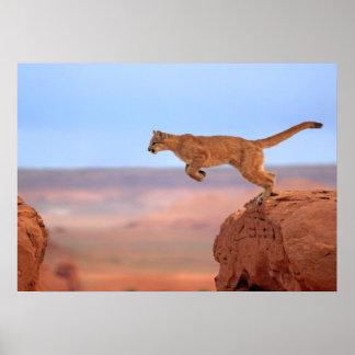 Leão de montanha poster