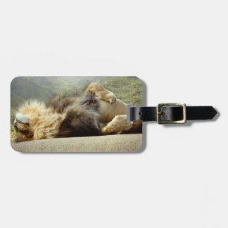 Leão do jardim zoológico que sonha de um Tag da Etiqueta De Bagagem