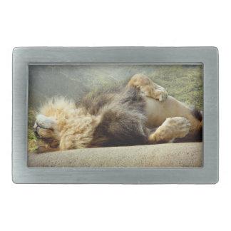 Leão do jardim zoológico que sonha de uma fivela
