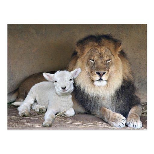 Leão e cordeiro cartao postal
