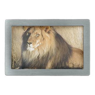 Leão que lounging em Nambia
