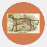 Leão-Tigre (híbrido de tigris do Felis de leo do Adesivo Em Formato Redondo