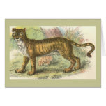 Leão-Tigre (híbrido de tigris do Felis de leo do F Cartão
