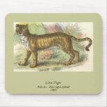 Leão-Tigre (híbrido de tigris do Felis de leo do F Mousepads