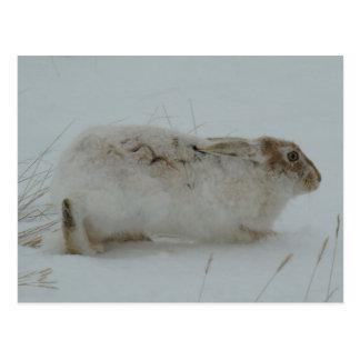 Lebre de sapato de neve R0007 Cartão Postal