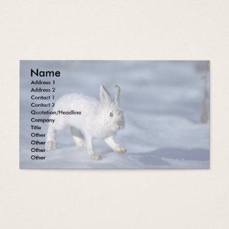 Lebre de variação/coelho de sapato de neve na neve cartão de visitas
