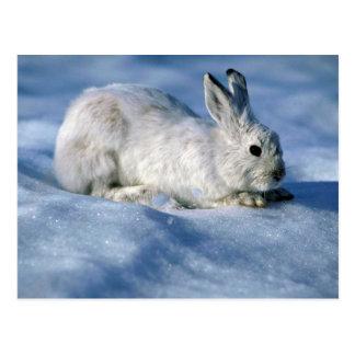 Lebre de variação/coelho de sapato de neve na neve cartão postal
