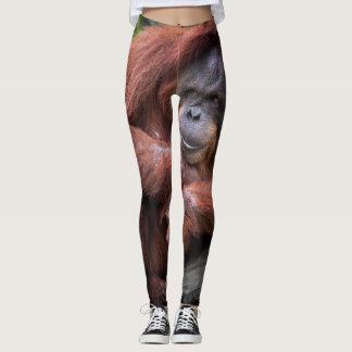 Legging caneleiras do macaco do orangotango