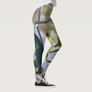 Legging Caneleiras incomuns que caracterizam o elo de