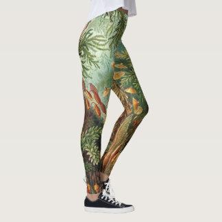 Legging Plantas do musgo do vintage por Ernst Haeckel,