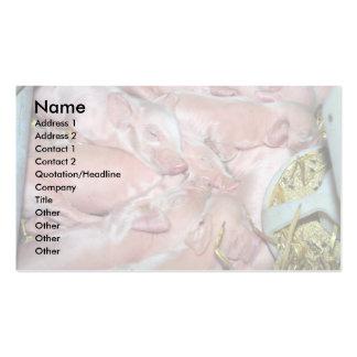 Leitão recém-nascidos cartão de visita