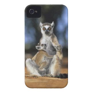 Lemur Anel-atado, (catta do Lemur), mãe e Capinha iPhone 4