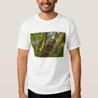Lemur de bambu na floresta de bambu, Madagascar T-shirts