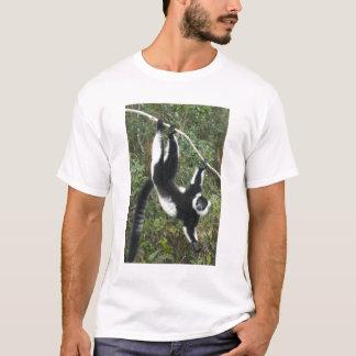 Lemur preto e branco de Ruffed, (Varecia Camiseta