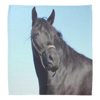 Lenço Cavalo preto e o céu azul