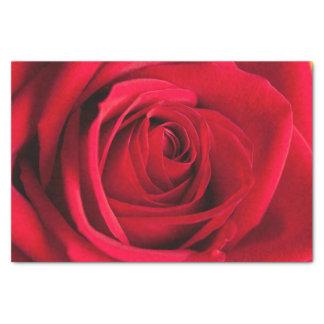 Lenço de papel bonito da flor da rosa vermelha