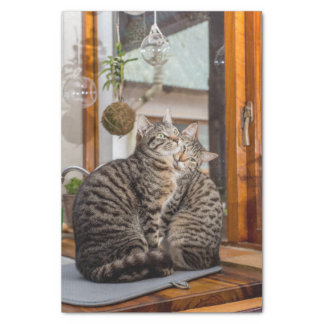 Lenço de papel com imagem de dois gatos
