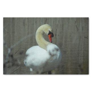 Lenço de papel da cisne