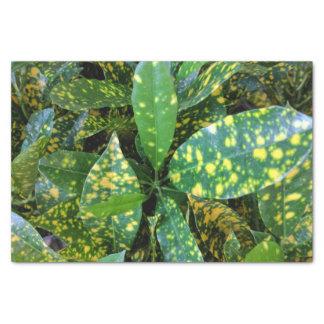 Lenço de papel do Croton