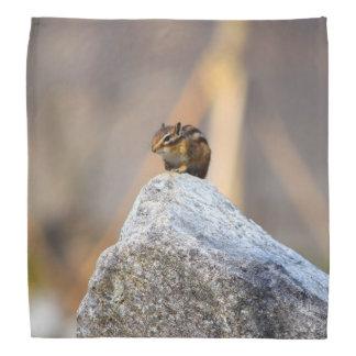 Lenço Esquilo