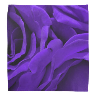 Lenço Foto roxa brilhante delicada da flor dos rosas