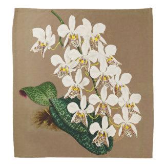 Lenço Orquídeas brancas impressão botânico, fundo de Tan
