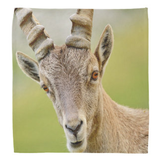 Lenço Retrato de um íbex