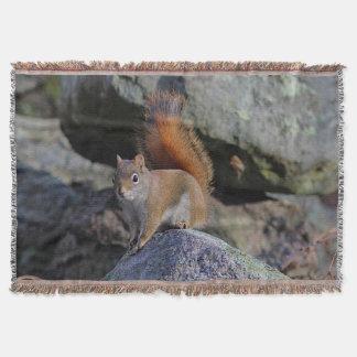 Lençol Esquilo vermelho em uma parede da rocha