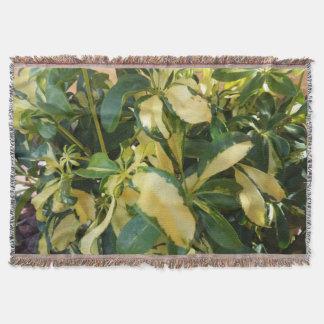 Lençol Euonymus planta verde e amarela de Fortunei das